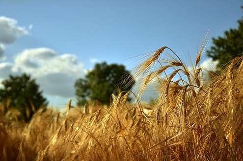 Agricoltura: bilancio Agea 2019