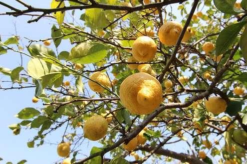 Agricoltura biologica - Photo credit: Foto di Samuele Schirò da Pixabay