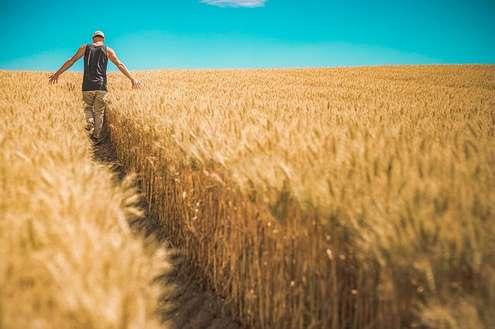 Finanziamenti e agevolazioni agricoltura